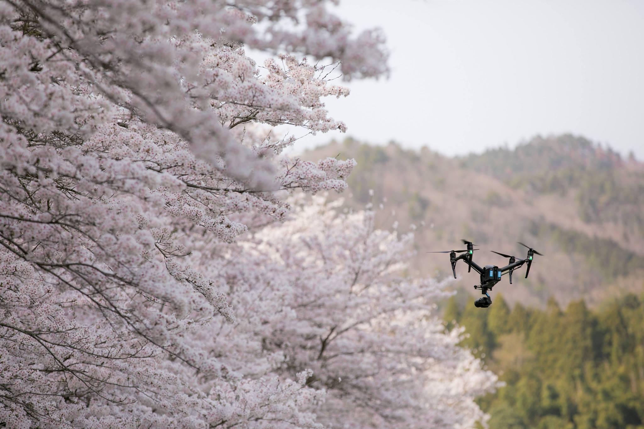 桜の空撮 ご依頼はお早めに!